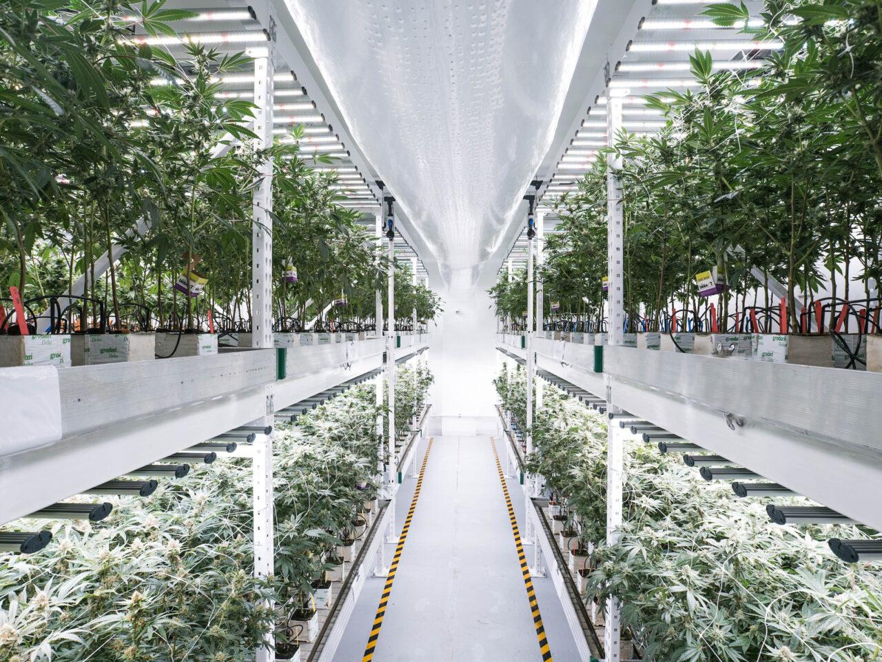 https://www.livfreeconsulting.com/wp-content/uploads/2020/12/Cannabis-Tiered-Farm-2-1280x960.jpg